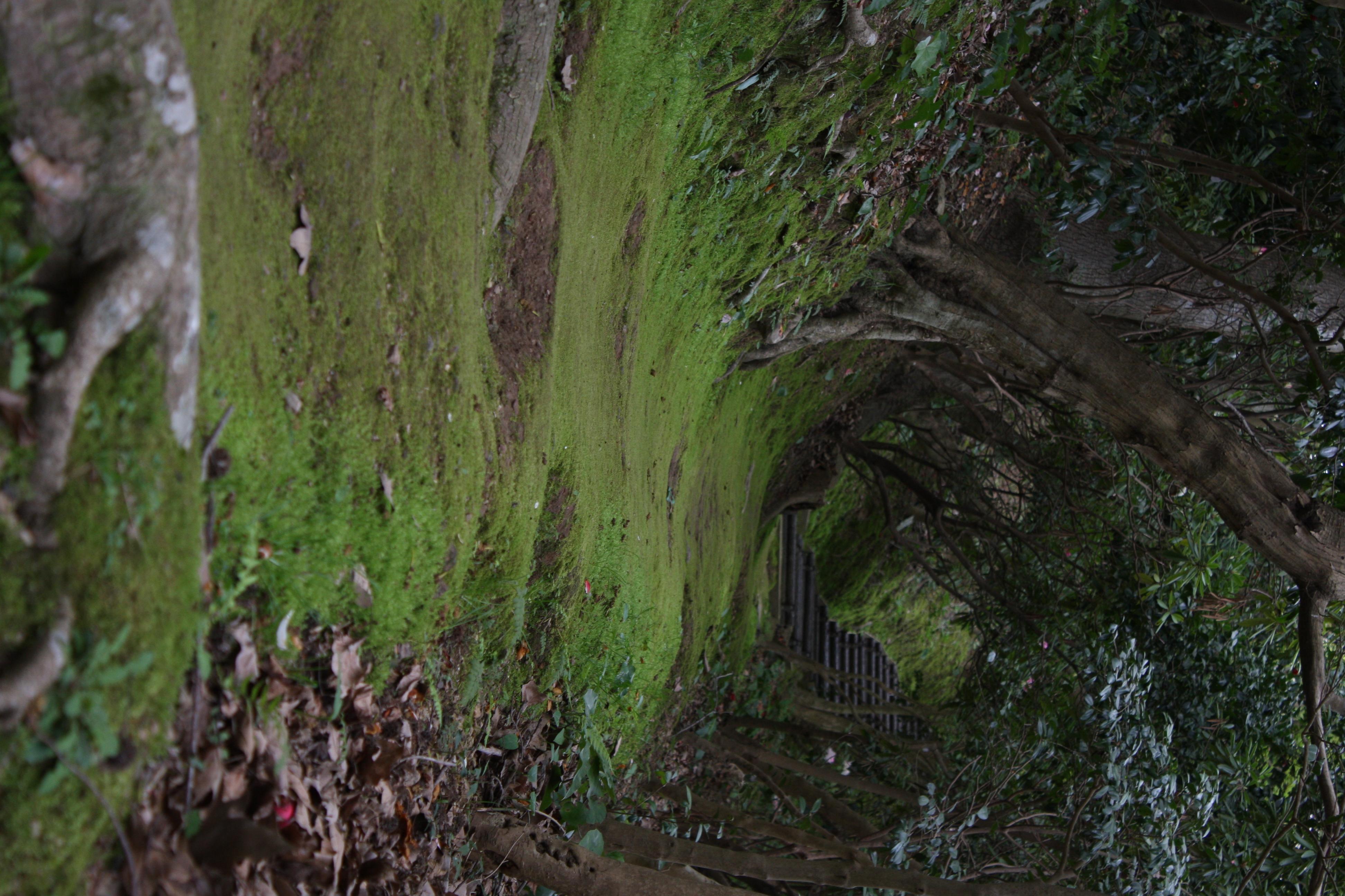 白野江植物公園で前撮り