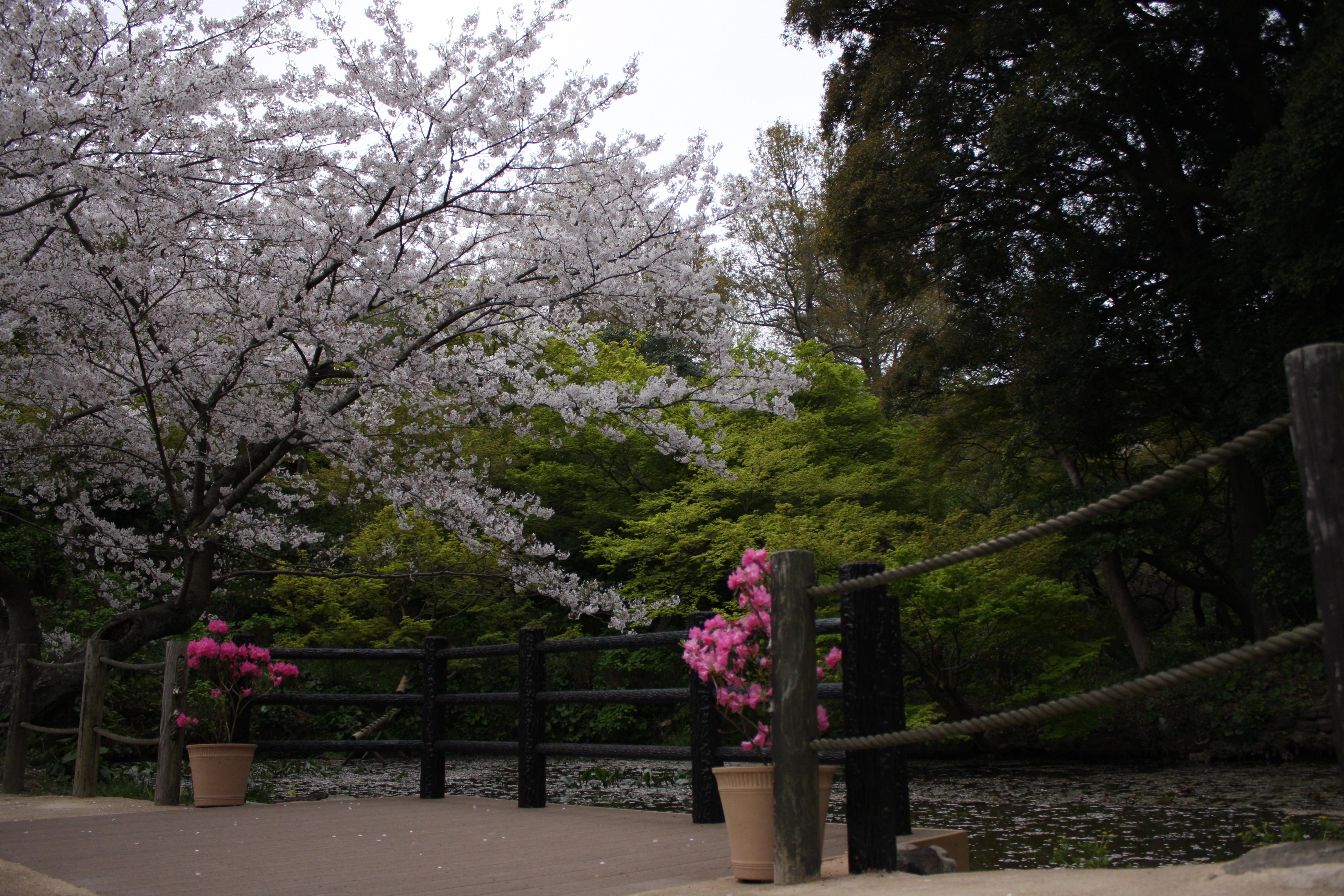 白野江植物公園について